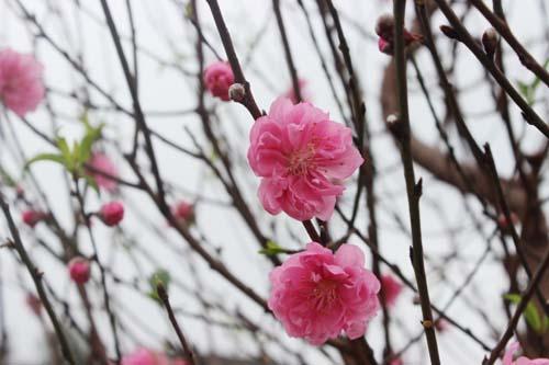 Mùa xuân năm nào cũng thế…
