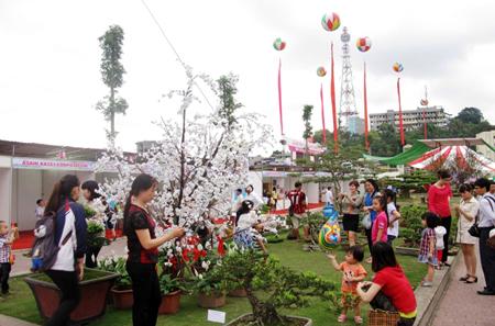 Lễ hội Hoa Anh đào – Mai vàng Yên Tử, Hạ Long 2016