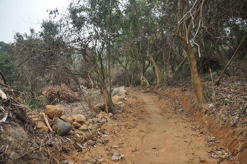 Đà Nẵng: Cách chức 2 lãnh đạo hạt kiểm lâm vì để xảy ra phá rừng Sơn Trà