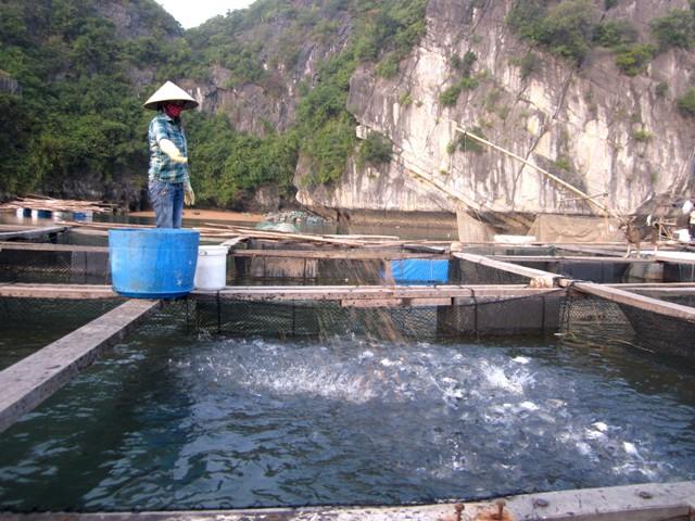 Huyện đảo Cát Hải tích cực chuyển dịch cơ cấu kinh tế, nâng cao thu nhập cho người dân