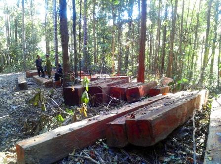 Kiên quyết thực hiện việc đóng cửa rừng tự nhiên