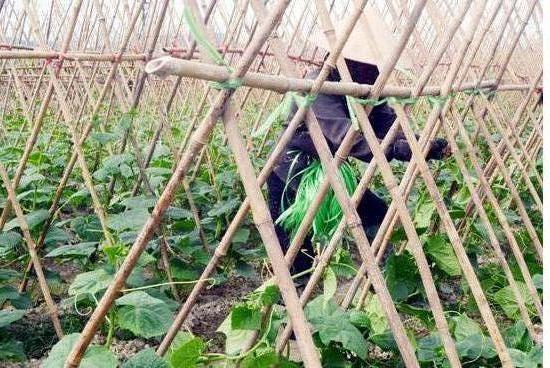 """Đông Triều (Quảng Ninh): Triển khai xây dựng mô hình nông thôn với tiêu chí """"4 tốt hơn"""""""