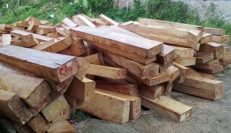 Quảng Nam: Phát hiện vụ phá rừng tại vùng biên giới với Lào