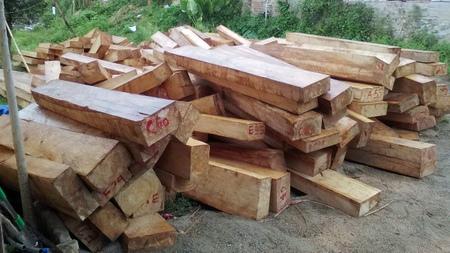 Quảng Nam: Phát hiện gỗ pơmu được cất giấu cách Trạm Kiểm soát Biên phòng khoảng 10m