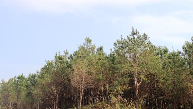 Giữ rừng tự nhiên, kiểm soát chặt chẽ nếu phải chuyển đổi