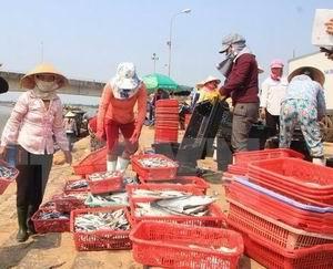 Triển khai bồi thường thiệt hại sự cố môi trường biển tại 4 tỉnh miền Trung