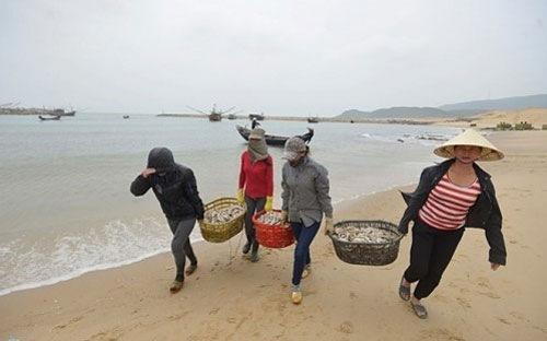 Hà Tĩnh gặp khó trong kê khai, xác định thiệt hại bồi thường sau sự cố biển