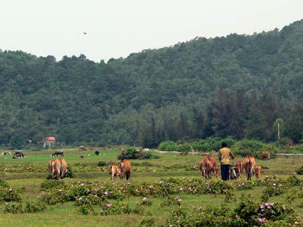 Quyết định số 2476/QĐ-TTg, ngày 30/12/2015 của Thủ tướng Chính phủ công nhận huyện Cô Tô, tỉnh Quảng Ninh đạt chuẩn nông thôn mới năm 2015