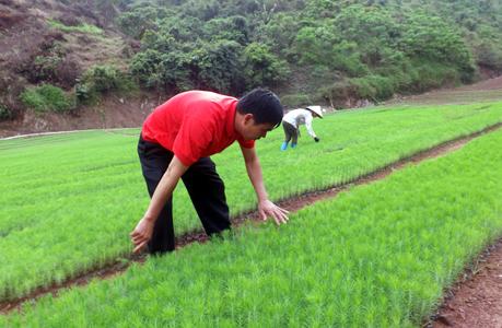 Đình Lập – Lạng Sơn: phấn đấu giảm 5% hộ nghèo trong năm 2016