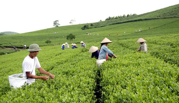 Tuyên Quang: Thực hiện đồng bộ nhiều giải pháp để giảm nghèo bền vững
