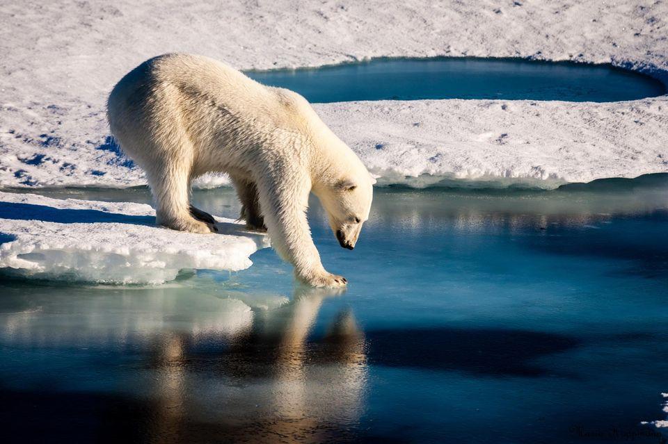 Bắc cực trải qua năm 2016 nóng nhất từng được ghi nhận trong lịch sử