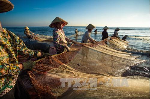 Hiệu quả mô hình phụ nữ vùng biển liên kết phát triển kinh tế