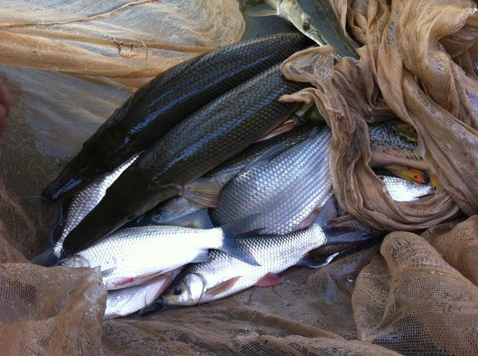 Vĩnh Yên: Khuyến khích mở rộng diện tích nuôi trồng thủy sản