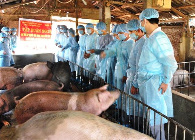 """""""Áp dụng kỹ thuật thụ tinh nhân tạo kết hợp với thú y cộng đồng nhằm phát triển chăn nuôi lợn theo hướng VietGAHP trong nông hộ"""""""