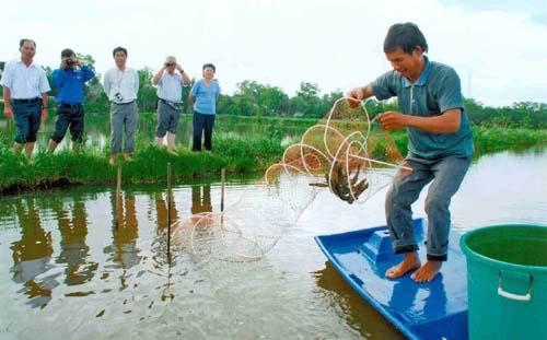Kiên Giang: Nuôi tôm càng xanh trên nền đất nhiễm mặn thu lợi nhuận cao