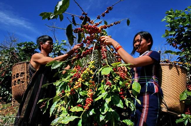 Tây Nguyên: Trên 4 ngàn hộ nghèo được hỗ trợ đất sản xuất trong năm 2016