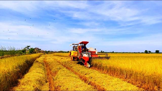 Nông nghiệp Việt Nam: Nhìn lại 2016 để củng cố phát triển trong 2017