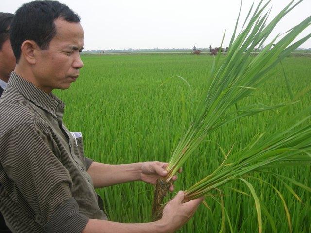 Khuyến khích đổi mới sáng tạo để nâng cao chuỗi giá trị nông nghiệp