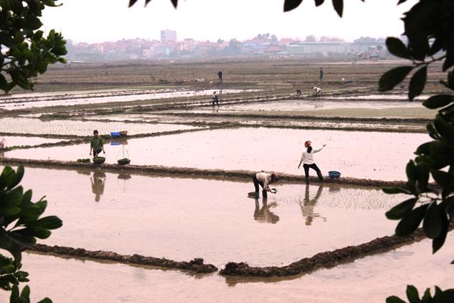 Hà Nội: Năm 2016, giá trị sản xuất nông, lâm, ngư nghiệp đạt trên 46 nghìn tỷ đồng