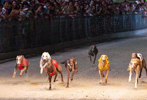 Trên 21 tuổi mới được tham gia đặt cược đua ngựa, đua chó và bóng đá quốc tế
