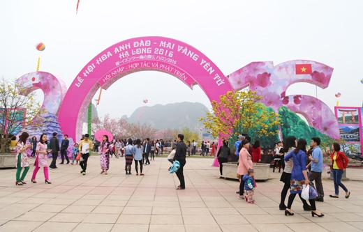 Lễ hội hoa Anh đào - Mai vàng Yên Tử diễn ra giữa tháng 3/2017