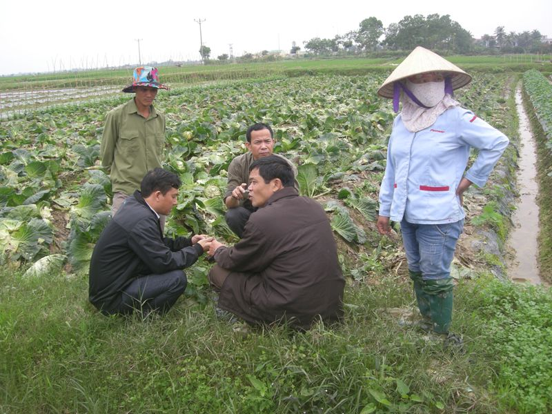 Liên kết nào cho tiêu thụ nông sản