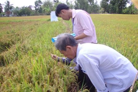 Long An xây dựng nông thôn mới gắn với chuyển đổi cây trồng, vật nuôi