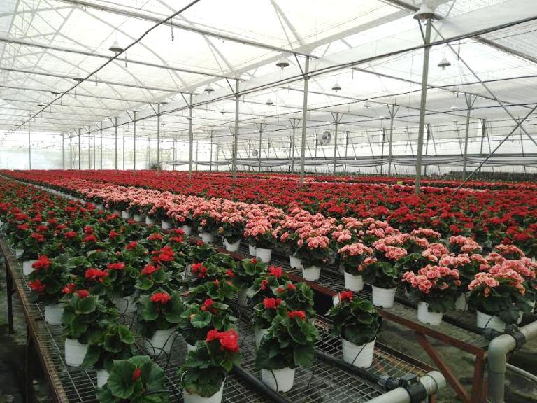 Hiệu quả từ các mô hình nông nghiệp công nghệ cao trong sản xuất rau, hoa