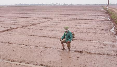 Tăng cường hướng dẫn nông dân sử dụng đúng thuốc bảo vệ thực vật