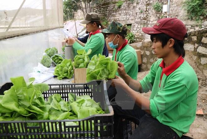 Đồng Tháp phấn đấu đạt 1.000 ha rau màu an toàn vào năm 2020