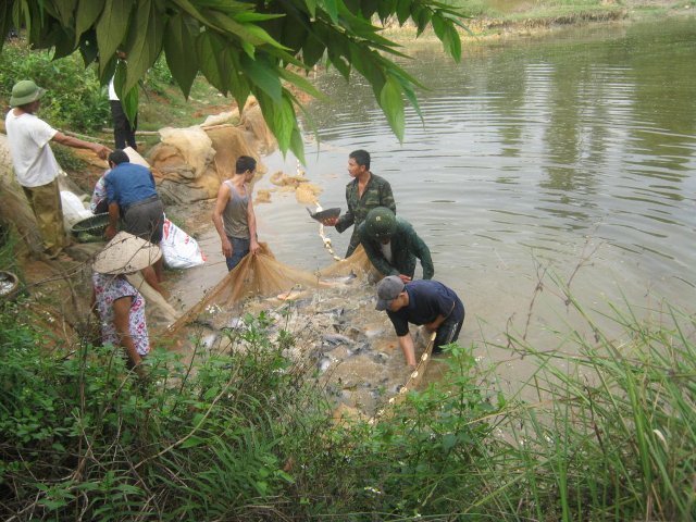 Hiệu quả từ phát triển các mô hình hợp tác xã thủy sản