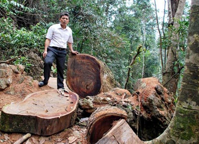 Hà Giang: Ngăn chặn tình trạng khai thác, vận chuyển lâm sản trái phép