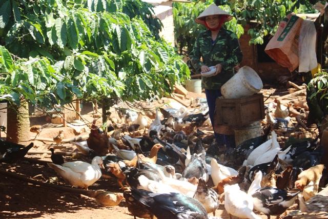 Ngân hàng Chính sách xã hội tỉnh Đắk Nông: Tích cực đưa chủ trương của Đảng đến với người nghèo