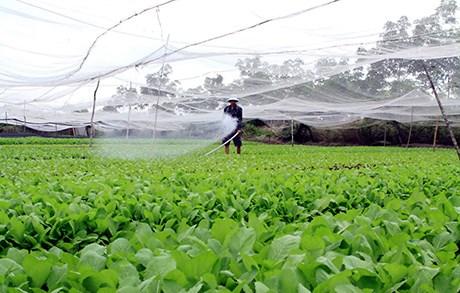 Bài 3: Mô hình quan hệ sản xuất nông nghiệp nào là phù hợp?