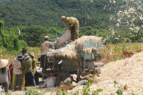 Bình Thuận: Chương trình 135 giúp ổn định, cải thiện đời sống người dân