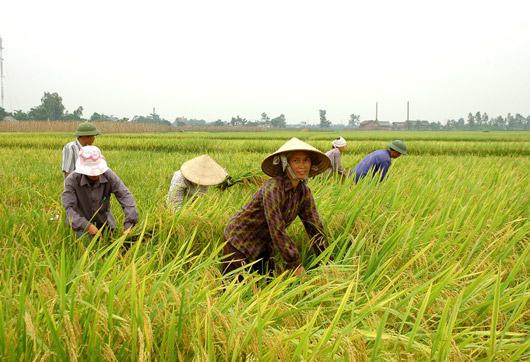 Quỹ Phát triển Nông nghiệp Quốc tế tài trợ 43 triệu USD cho Việt Nam