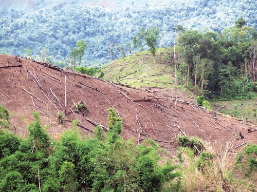 Khởi tố nhiều vụ hủy hoại rừng tại Mường Nhé, Điện Biên