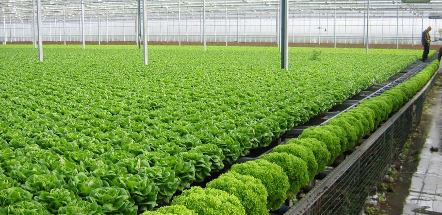 Đầu tư công nghệ cao để sản xuất rau an toàn