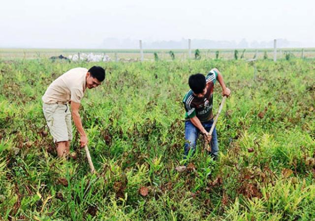 Triệu Sơn (Thanh Hóa): Vốn tín dụng chính sách góp phần đẩy mạnh tái cơ cấu sản xuất