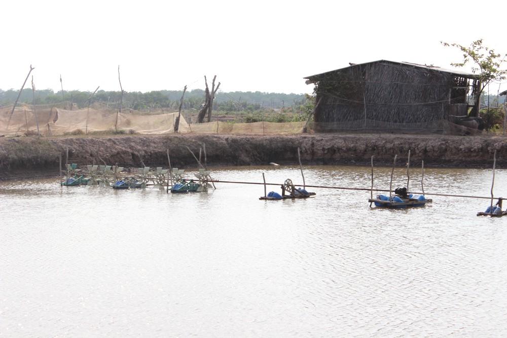 Tăng cường chỉ đạo sản xuất tôm nước lợ