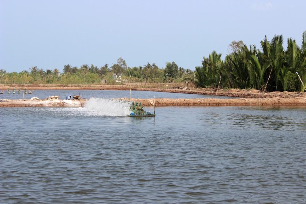 Sóc Trăng: Chủ động các giải pháp phát triển nghề nuôi tôm nước lợ