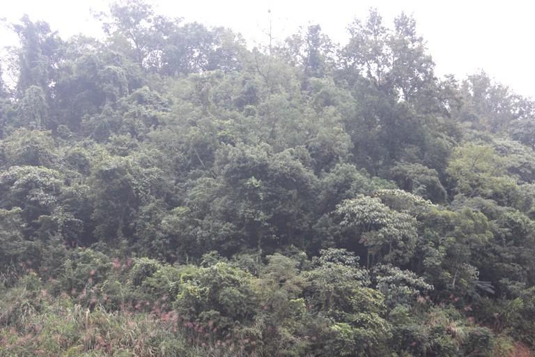 Tăng cường thực hiện các biện pháp quản lý, bảo vệ rừng