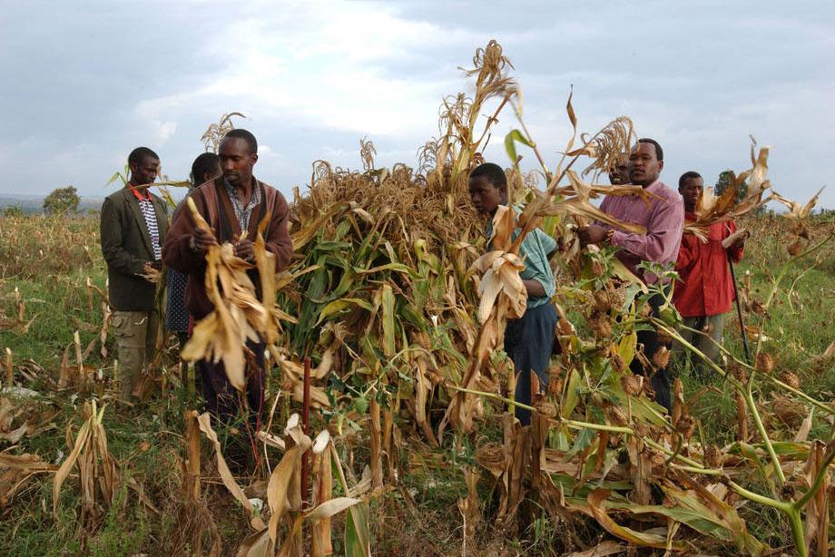 FAO cảnh báo nạn đói tại các khu vực xung đột