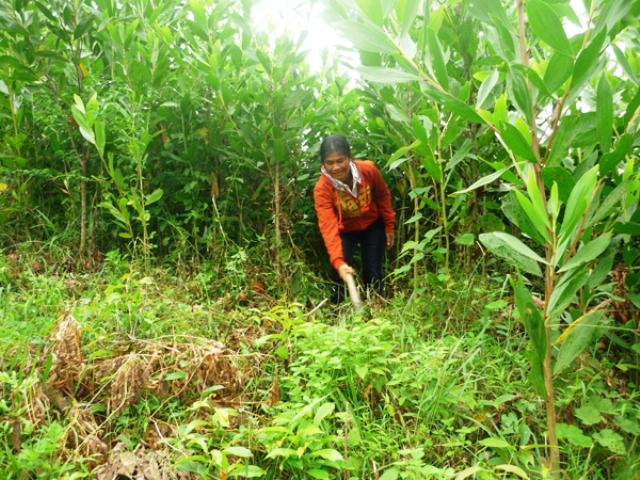 Bảo vệ và phát triển rừng bền vững