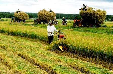 Con đường tái cấu trúc nông nghiệp Việt Nam (Bài 1: Ngữ cảnh và những bài học kinh nghiệm)