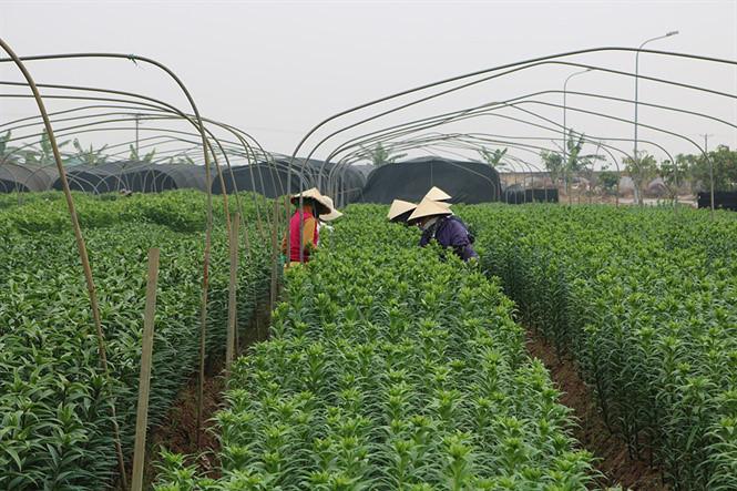 Hướng đi mới trong xây dựng nông nghiệp hàng hóa