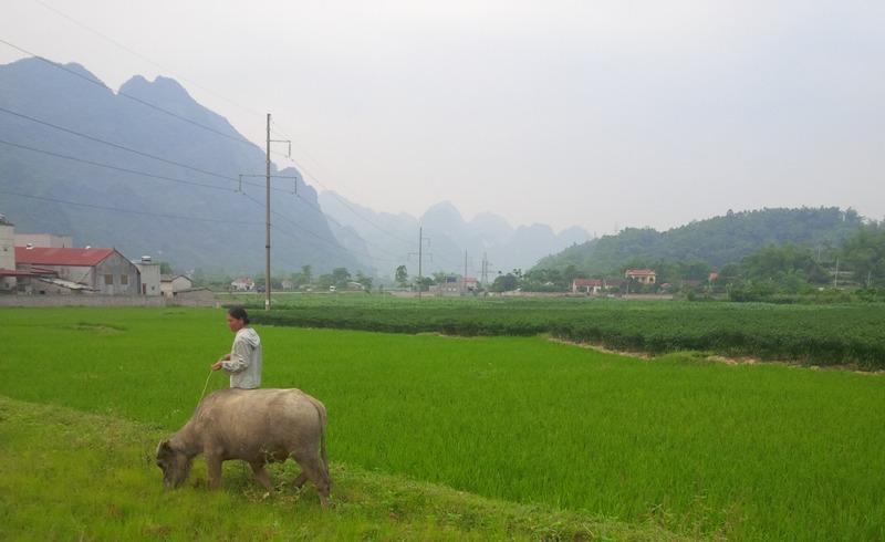 Hà Giang nỗ lực giảm nghèo bền vững