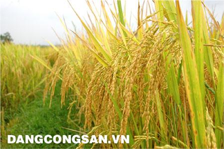 Đẩy mạnh hoạt động xuất khẩu gạo