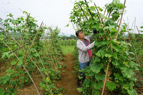 Hòa Bình: Tiếp tục tháo gỡ khó khăn cho sản xuất nông nghiệp hữu cơ