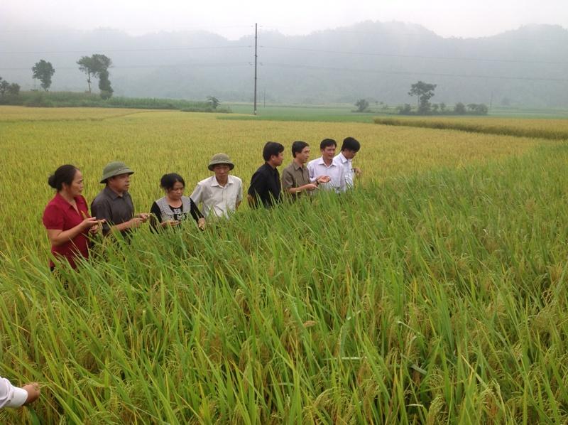 Hà Giang: Tiếp tục đẩy mạnh phát triển các Chương trình nông nghiệp, nông thôn